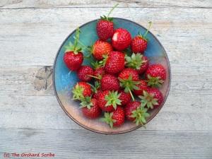 05_07_2013 Strawberries_3
